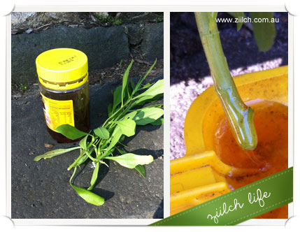 On A Gardening Budget And Looking For Rooting Hormone Alternative Then Head To The Kitchen Pantry Grab Jar Of Honey